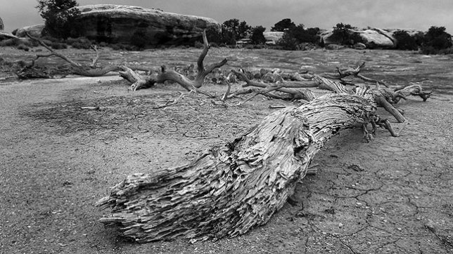Driftwood and stones on the Pothole Point trail, Needles district, Canyonlands National Park.