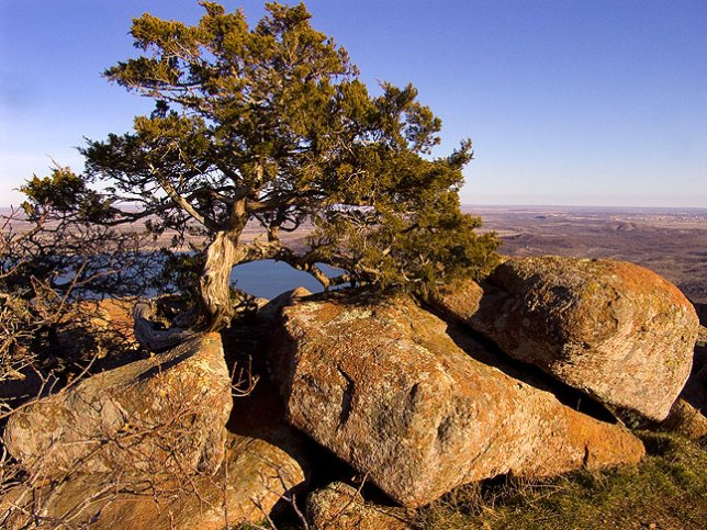 Windswept Tree, Mount Scott