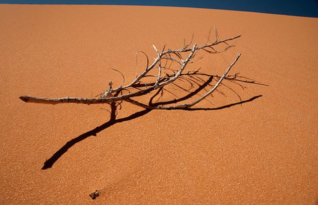 A lone branch sits on the windswept sand at Coral Pink Sand Dunes State Park, Utah.