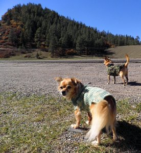 Our dogs, Sierra and Max, wearing Abby's handmade sweaters, take a break to stretch their legs in southern Colorado.