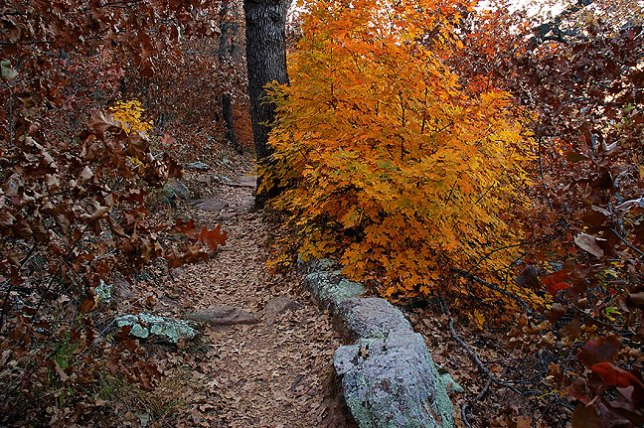 Foliage, Elk Mountain Trail