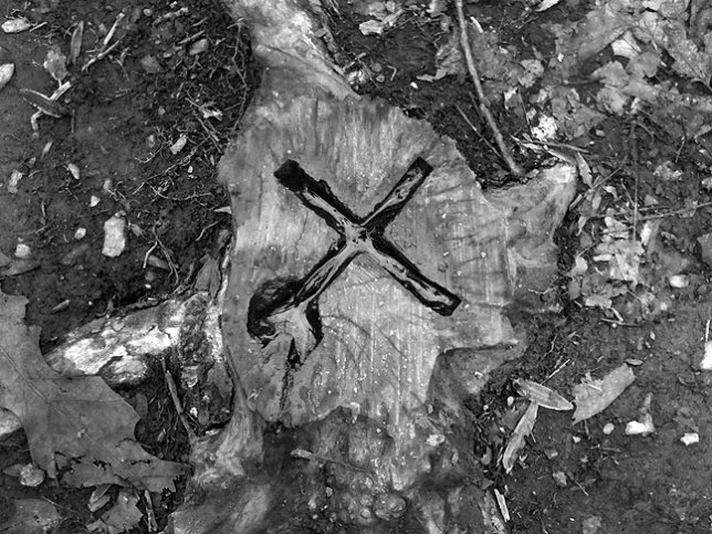 The only thing we could find that seemed symbolic or supernatural in any way was this odd, water-filled cut in a stump.