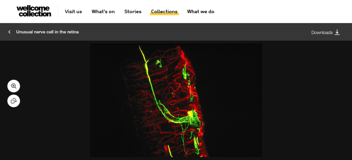 screenshot of the Wellcome Collection image library website