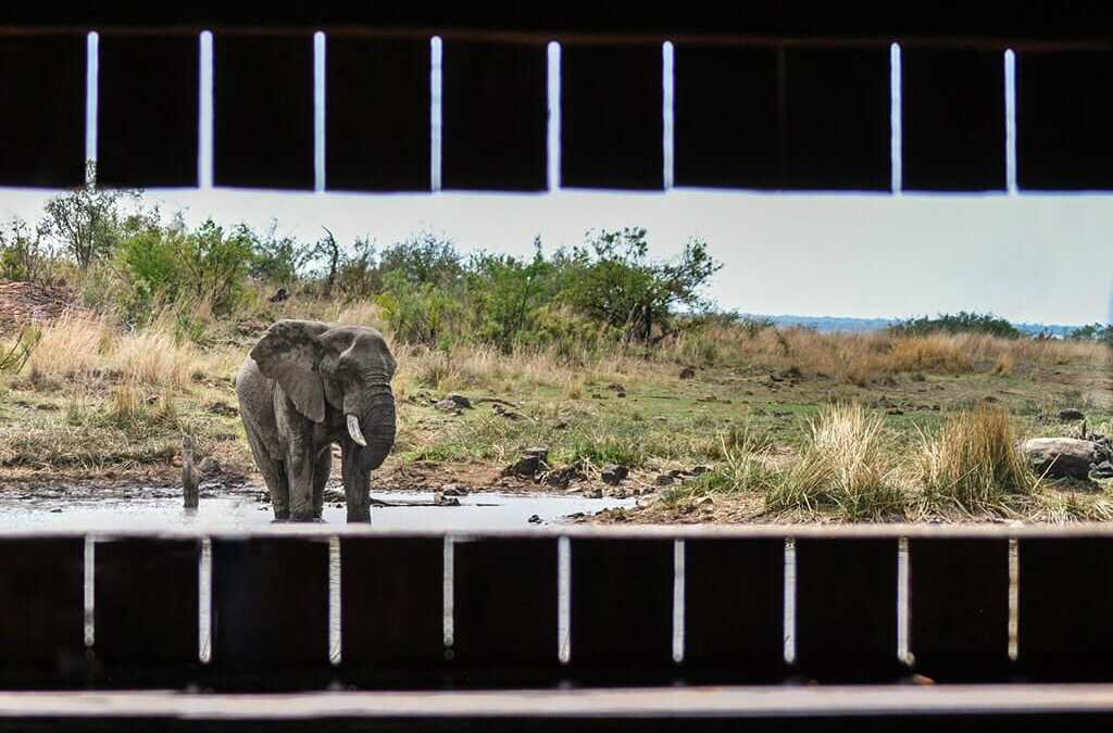 Pilanesberg Hide