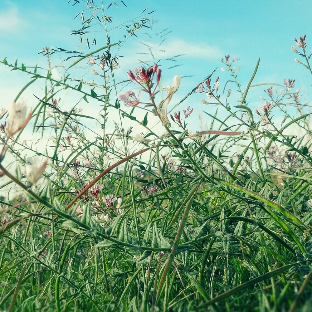 Field Wild Flowers