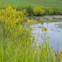 contrast-flowerspondblog