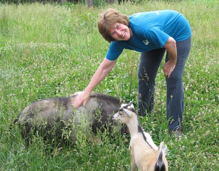 Kathy Pets Pig 1x