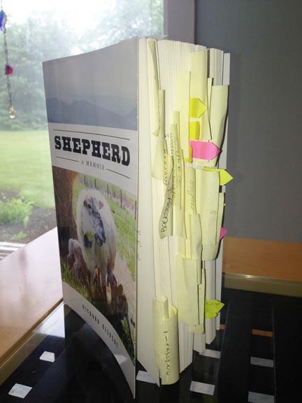 Shepherd mauled2x