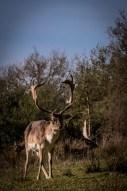 new-forest-deer-2_16952829209_o