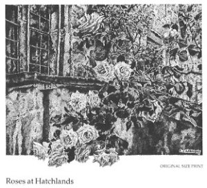 Roses at Hatchlands