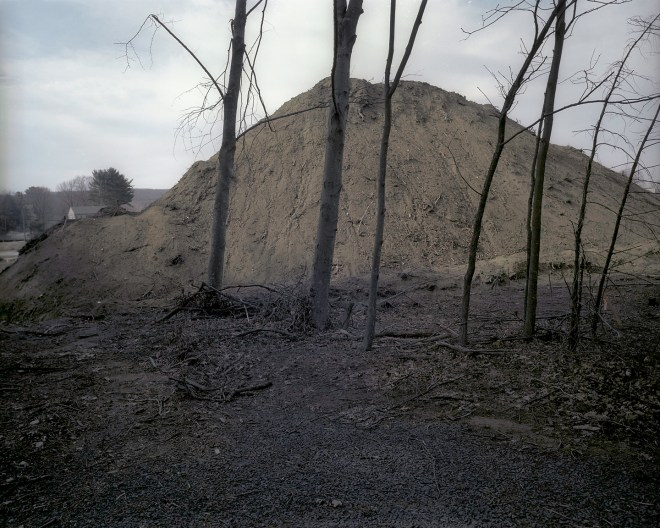 Mound and trees 1