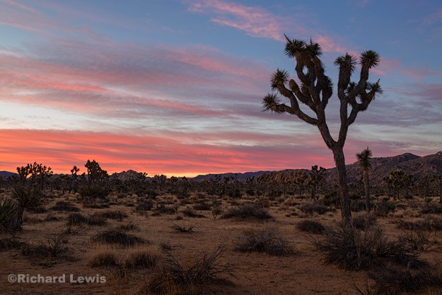 Dawn on the Boy Scout Trail by Richard Lewis