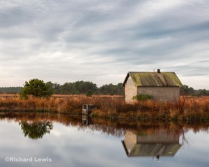 Peaceful Morning In The Pine Barrens