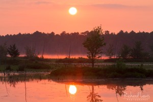 Firey Mist On The Lake in the Franklin Parker Preserve NJ Pinelands by Richard Lewis