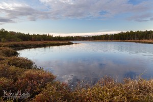 Early Fall Morning in the Pine Barrens