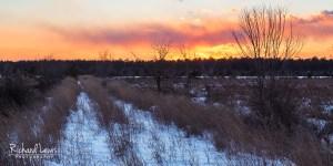 Fading Winter Light in the Franklin Parker Preserve NJ Pine Barrens