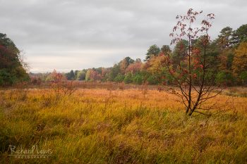Black Run Preserve In The Fall Pine Barrens