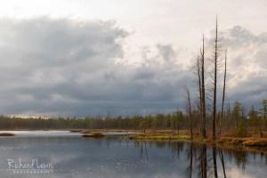 Friendship Pinelands Pine Barrens