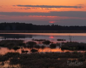 PInelands Afterglow by Richard Lewis 2018