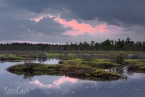 Pine Barrens Afterglow