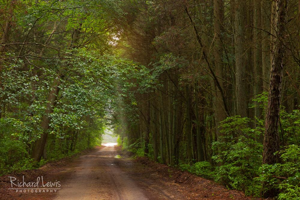 Pinelands Morning Light