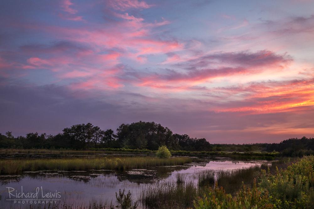 New Jersey Pine Barrens Twilight Glow