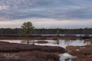 Whitesbog Evening New Jersey Pinelands