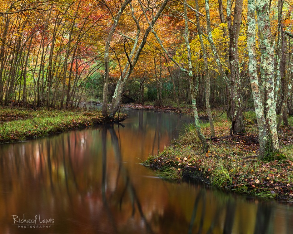 Pine Barrens Fall Reflections