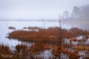 Pine Barrens Foggy Spring Morning