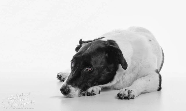 Pet photography in county durham