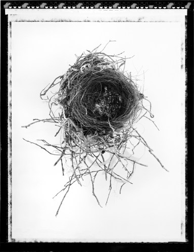 Bird's Nest Incorporating Human Refuse