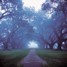 Early Morning Fog, Oak Alley Plantation; Vacherie, LA; 2000