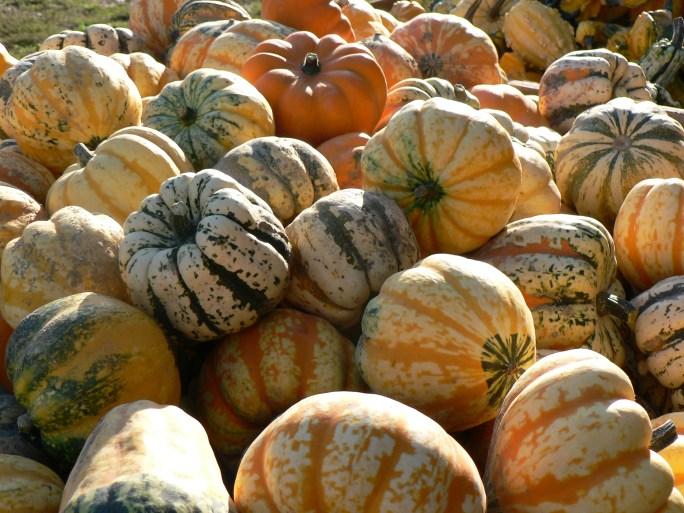 2007Sept Oct 032