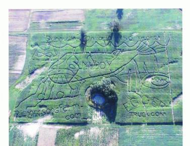 Corn maze