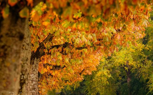 Zurich autumn leaves colours