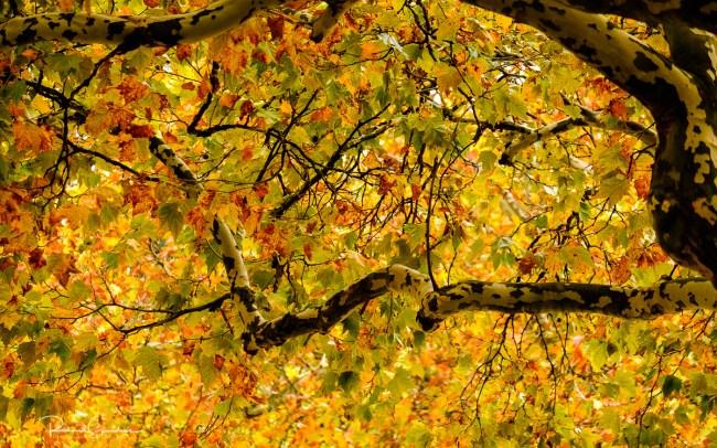 vibrant autumn colours
