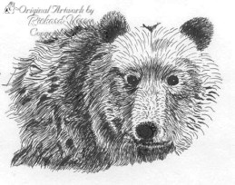 bear portrait pen and ink