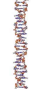 gene splicing 27282224 - dna molecule, structural fragment of z-form, 3d illustration