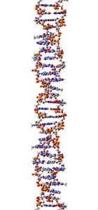 gene splicing at the genetic level 27282224 - dna molecule, structural fragment of z-form, 3d illustration