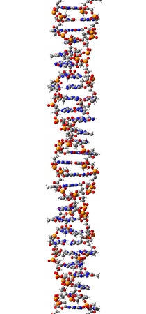 27282224 - dna molecule, structural fragment of z-form, 3d illustration