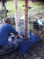 bigger mesh keeps the rabbits out (a third round going higher will protect from deer. rabbits gnaw all round the trunk, deer go for the buds
