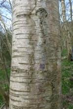 bark - lots of good patterns in bark