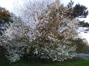 MORE blossom (springtime anyone?)