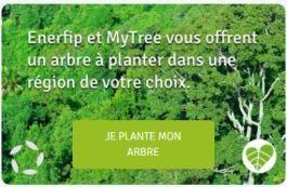investissement simple arbre