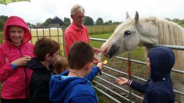 Feeding apples to the white horse (6)