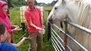 Feeding apples to the white horse (8)