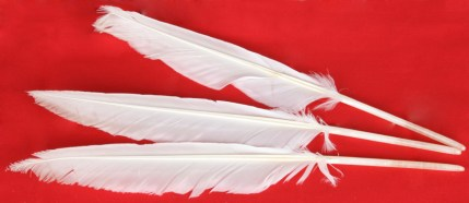 White Goose feather