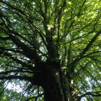 Make a break for the trees: Crystal Palace's Stambourne Woodland Walk