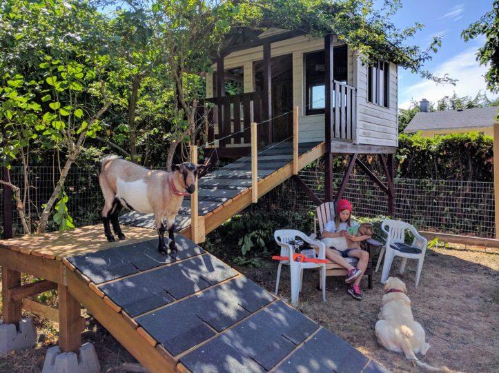 The goat condo ramp
