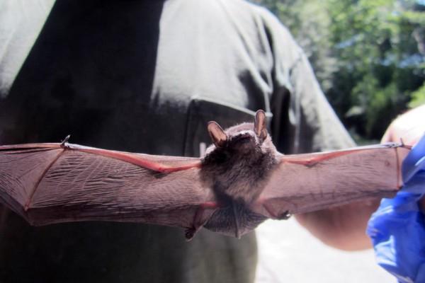 bats control